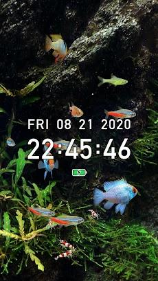 熱帯魚育成「ミニアクア」癒しのアクアリウム体験のおすすめ画像2
