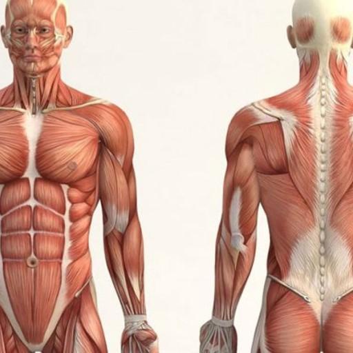 Baixar Human anatomy para Android