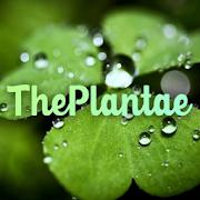 The Plantae - Plant identification