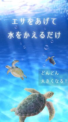 ウミガメ育成ゲーム(癒しのリラクゼーション編)のおすすめ画像2
