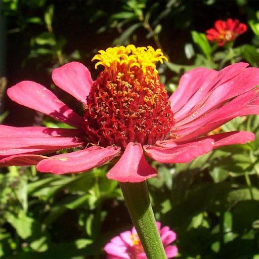 Flower Jigsaw Puzzles 2.9.44 screenshots 11