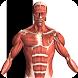 Visual Anatomy - Androidアプリ