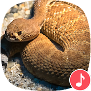 Appp.io - Rattlesnake Sounds