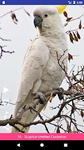 Bird Sounds 1