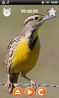 Birds Calls Sounds