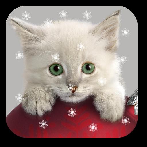 Xmas Cat Live Wallpaper Apps On Google Play