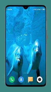 Dolphin Wallpaper HD