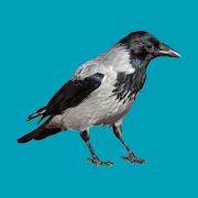 Progressive decoy of crows