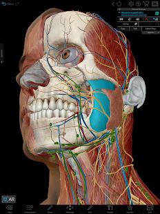 Human Anatomy Atlas 2021:u00a0Complete 3D Human Body 2021.2.27 Screenshots 9