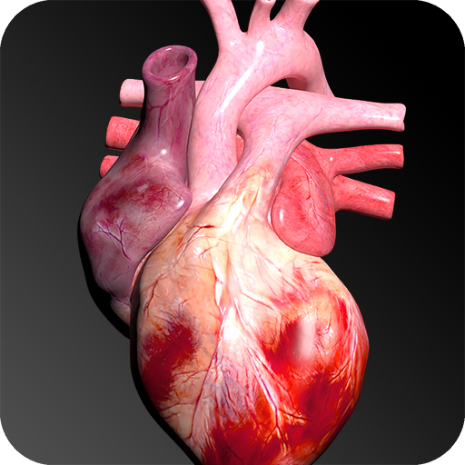 Baixar Circulatory System in 3D (Anatomy) para Android