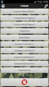 Bird Sound Free 4