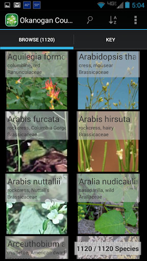 1250 Alberta Wildflowers For PC Windows (7, 8, 10, 10X) & Mac Computer Image Number- 5