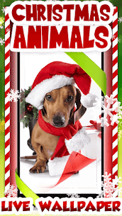 Download Christmas Animals Live Wallpaper in Your PC (Windows and Mac) 1