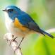 野鳥の名前を覚える - Androidアプリ