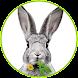 Dein Kaninchen Kräuterguide