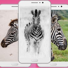 Cute Zebra Wallpaper Apk - Animal Backgrounds Apps Download on Windows
