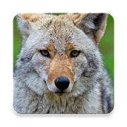 Top 21 Music & Audio Apps Like Coywolf Sound Collections ~ Sclip.app - Best Alternatives