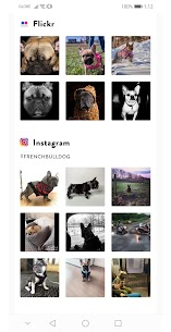 Dogs Pedia – Dog Breeds Identifier 3