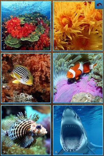 Sea Life Jigsaw Puzzles screenshots 9
