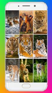 Tiger Wallpaper HD