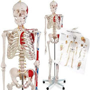 Learn Human Anatomy Video Lectures