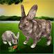 究極のウサギシミュレータ - Androidアプリ