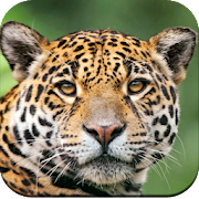 Wild Animal Wallpaper 4K