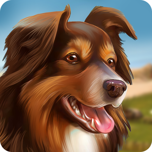 Dog Hotel – Play with dogs