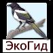 ЭкоГид: Птицы