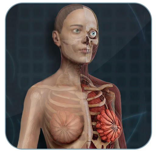 Baixar Female Anatomy 3D : Female 3D organs Anatomy para Android