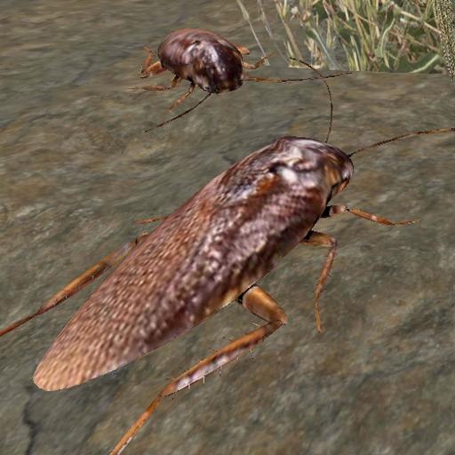 Baixar Cockroach Simulator - animal game para Android
