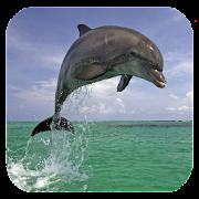 Dolphin 3d. Video Wallpaper