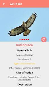 Bird Identification 4