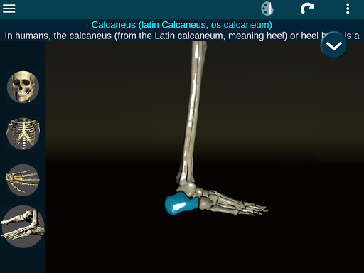 Osseous System in 3D (Anatomy) 2.0.3 Screenshots 22