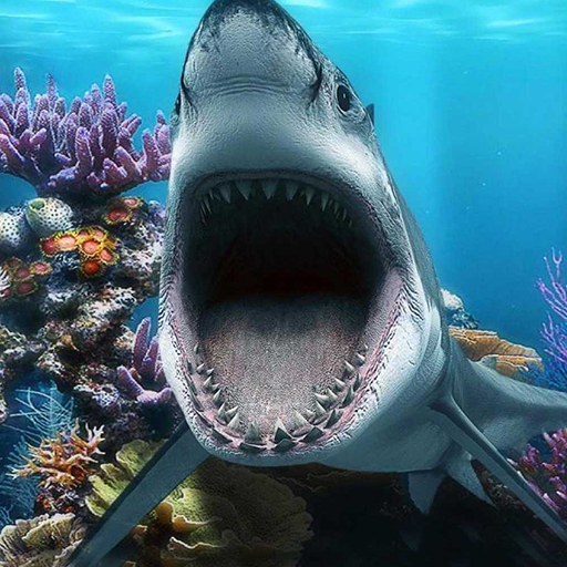 carduri de dating rezervor de rechin)