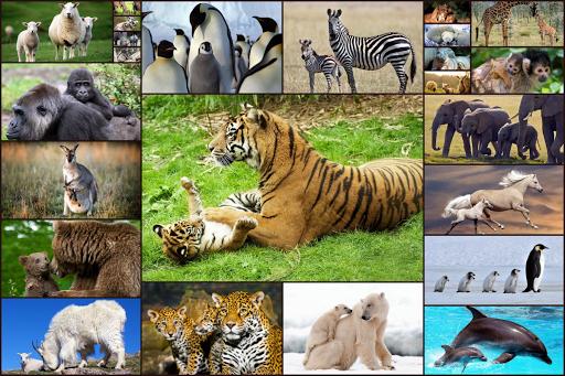 Animal Babies Jigsaw Puzzles Game - Kids & Adults screenshots 1
