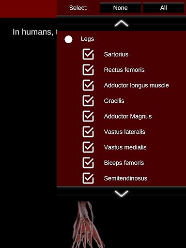 Muscular System 3D (anatomy) 2.0.8 Screenshots 21