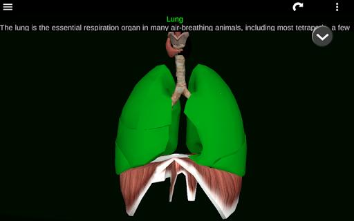 Internal Organs in 3D (Anatomy) 2.5 Screenshots 22