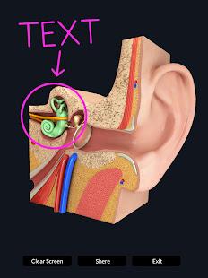 My Ear Anatomy
