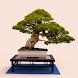 Bonsai Tree Grow & Care Tips