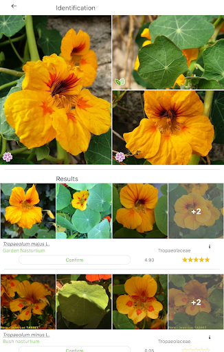 PlantNet Plant Identification 3.3.24 Screenshots 8