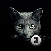 Find a cat 2. For Free!